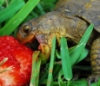sewtigersew: (Turtle)