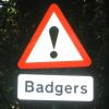 perlmonger: (badger)