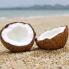 settiai: (Coconuts -- settiai)