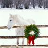 sgamadison: (Winterhorse)