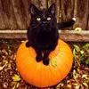 sgamadison: (Halloween Cat)