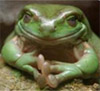 freewaydiva: (Conniving Frog)