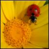 freewaydiva: (Ladybug)