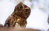 disgruntled_owl: annoyed owl (0)