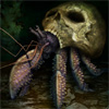 hwango: (hermit crab)