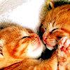 debris_k: kissing kittens by a_gal_icons@lj (kitty!kisses by a_gal_icons@lj)