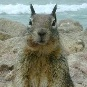 rcw: (squirrel)