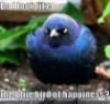 sarahbyrdd: (bluebird)