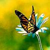 iamleaper: (butterfly)
