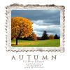 nodivision: ([Seasons] Fall - Grey Sky)