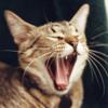 dr4b: (yawn)