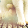 boneverse: (paws)