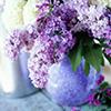 boneverse: (lilacs)