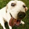 luzribeiro: (Dog)