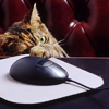 oanja: (stock cat mouse)