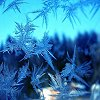 calligrafiti: (frost blossom)