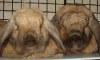 bunrab: (bunnies)