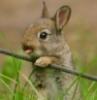 lloli: (ninja bunny)