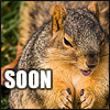 anagramofbrat: (Evil Squirrel (SOON))