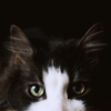 bellflower: The top half of a cat's face staring at the screen ([Cats] Piercing eyes)