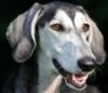 palepalefire: (Dog)