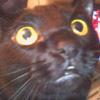 medievalism: (Freeway kitty!)