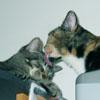 labelleizzy: (cats)