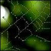 labelleizzy: (networking)