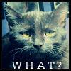 innuendocaptain: (Kitty - grumpy)