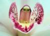 spiralflames: (sensuality)