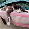 benia: (cat)