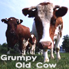 lauramcewan: (grumpy old cow)