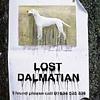 ♞ dada DADA dada ♞: Lost Dalmatian