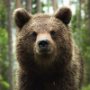 alpinebear: (Default)