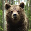 alpinebear: (Default)