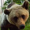 alpinebear: (curious)