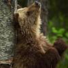 alpinebear: (joyful)