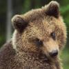 alpinebear: (o'really)