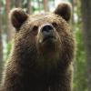 alpinebear: (thoughtful)