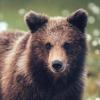 alpinebear: (watching)