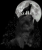 nepravilnyep4el: (Одинокий волк)