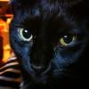 blackcatsandcoffee: (Default)