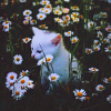 nekhbet_love: (kitty garden)
