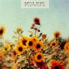 lissomelle: STOCK: Sunflowers
