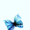lissomelle: STOCK: Blue Butterfly