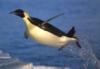 penguina: (Летим!)