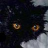 arthin: (nevercat)