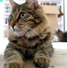 ironed_orchid: fluffy tabby cat, two paws stretched out on carpet, reaching towards camera (Paw)