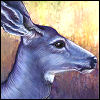 frost_hart: painting by me (Mule Deer Doe)