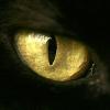 blackmalkin: (catseye)